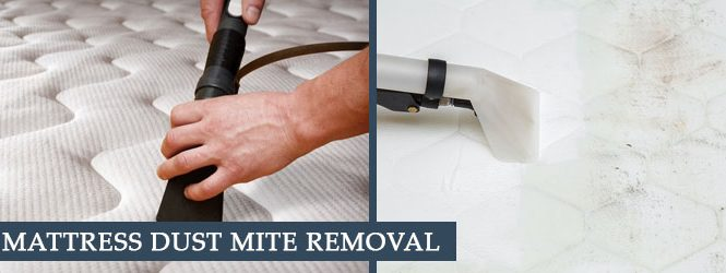 Remove Dust Mites From Mattress