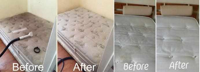Mattress Bed Bug Removal Services