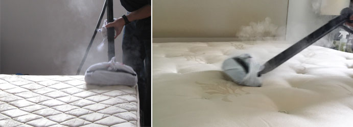 Mattress Steam Cleaning Lemon Tree
