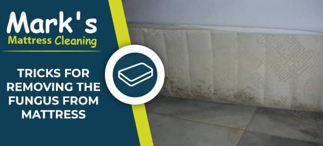 Tricks for Removing the Fungus From Mattress